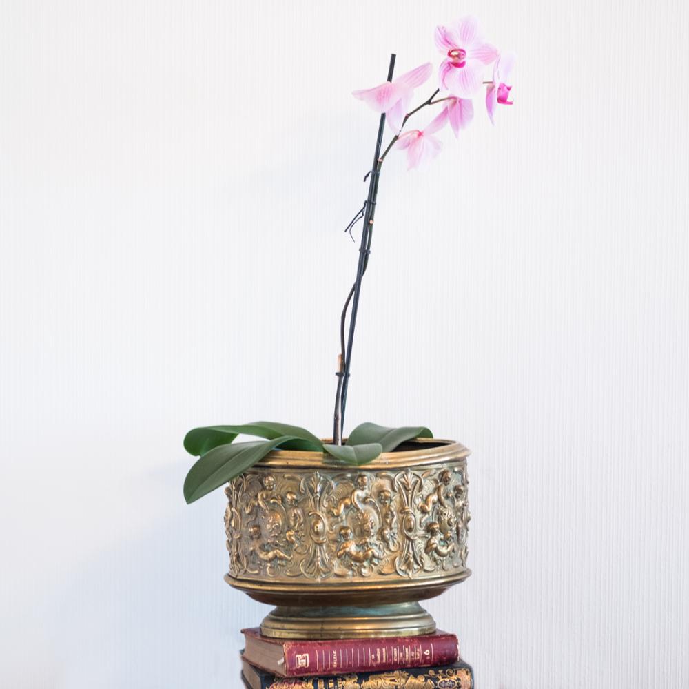 Cache pot époque XIXème en laiton à décor d'angelots et feuillage à retrouver sur le site www.lescuriositesdemilie.fr 3